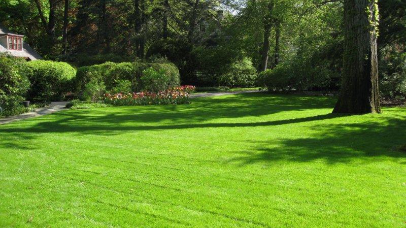 Organic Lawn Treatment - Pure Lawns